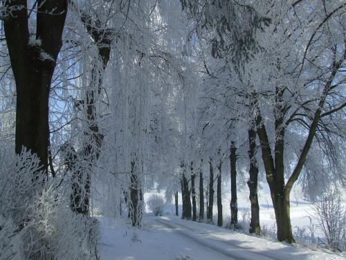 Zimní obrázky obce Cehnice a Dunovice.